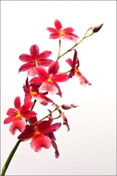 tallinn_botaanikaaed_2012_fotokoolitus_fotokursused_peeter_sirge_fotokool