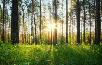 kasvav mets