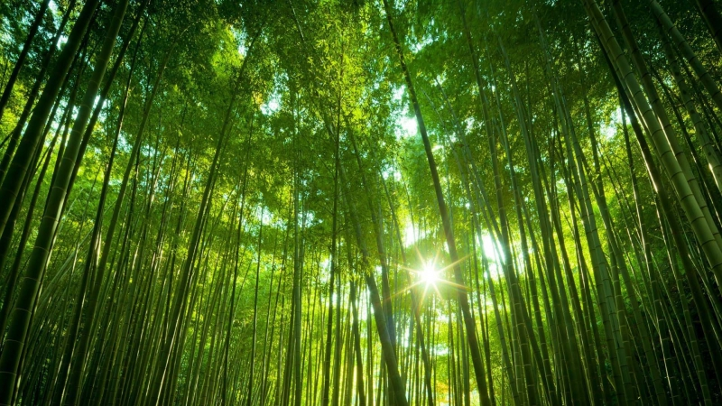 bamboo-forest1920x1080