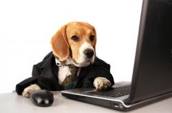 beagle oü
