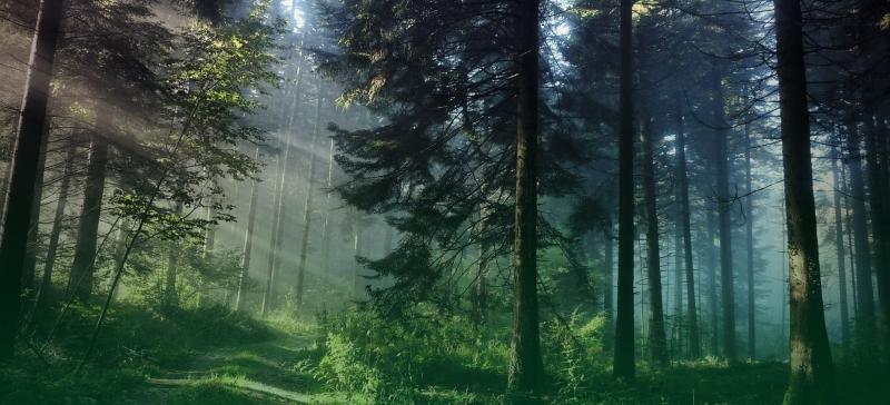 metsakinnistu pilt