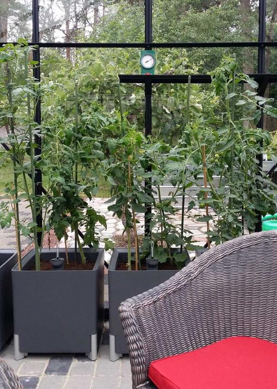 kastmissüsteemiga-taimepott-tomatitele