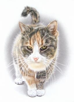 soojaku kass kadreeritud satur veeb